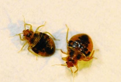 bed bugs control berkeley