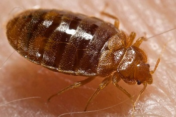bed bugs berkeley ca