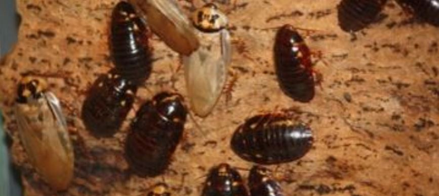 This is an image of roach pest control