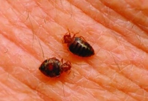 this is an image of berkeley bed bug control